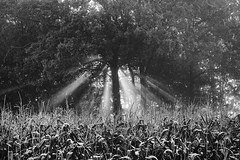 _MG_8740K (grzegorz_63) Tags: bw sunbeams trees sunrise light canon70d