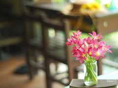 Desk & Rain lily (LuciaLin) Tags: