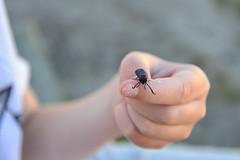 Bug (Fraila) Tags: bug closeup vacation holiday hand summer denmark jutland macro nikon d600