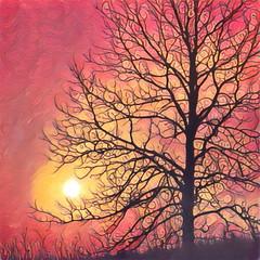 Prisma Candy Tree (Caroline.32) Tags: tree sunset prisma app happyslidersunday slidersunday candy nikond3200 55300mmlens glacialconservationpark