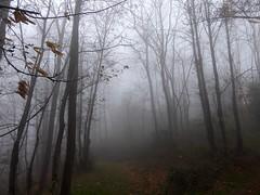 avete nostalgia della nebbia ? (fotomie2009 OFF) Tags: conca verde nebbia fog savona liguria italiy italia