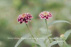 A Beautiful Story (Denise @ New Mercies I See) Tags: flowers home outmywindow outmydoor marigold garden mogadore onethousandgifts dof text quote summitcounty ohio summer august matte