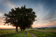 twilight beech (D Cation) Tags: scotland eaglesham beechtrees eagleshammoor gloaming twilight
