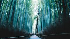 (stanley yuu) Tags: gr natural nature arashiyama kansai kyoto japan