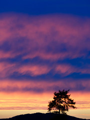 Sunset August 2016 (kckelleher11) Tags: 100300mm 2016 ireland kildare olympus sunset august curragh em5 landscape omd panasonic sky