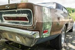 R/T (p.bieniek) Tags: muscle car auto high performance us nikon usa dodge regal oldtimer beauty red fahrzeug chrom chrome alt restauriert rot d500