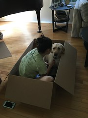 Calvin joined by Christen in the box (hero dogs) Tags: dog labrador cute therapydog servicedog