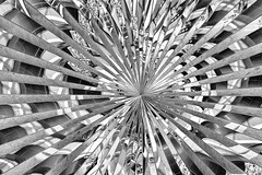 Convergence point (ronperry811) Tags: pattern art topaz abstract reflections bw pem blackwhite salem noiretblanc skancheli