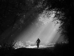 Moment in the sun (ArtGordon1) Tags: sunrays misty autumn autumnal cycleride cycling cyclist eppingforest davegordon davidgordon daveartgordon davidagordon daveagordon artgordon1 blackandwhite monochrome