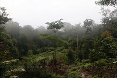 IMG_9372-1 Serene at 7 am-ish (Vince_Adam Photography) Tags: rainforest mossyforest highaltitude hill mountain sabah maliaubasin borneo malaysia eastmalaysia lostworldofsabah