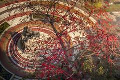 Autumn of Siriraj (Joseph Benchapol) Tags: siriraj hospital bangkok thailand prince mahidol autumn landscape