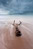 (Louise Denton) Tags: ocean sea storm beach cloudy australia stormy darwin driftwood lightning thunder mindilbeach ☆thepowerofnow☆