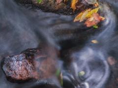 Fluir  . . . (Juan Machado [McKeyn]) Tags: españa naturaleza hoja río mar andalucía spain agua paisaje cádiz arroyo campodegibraltar losbarrios parquenaturallosalcornocales