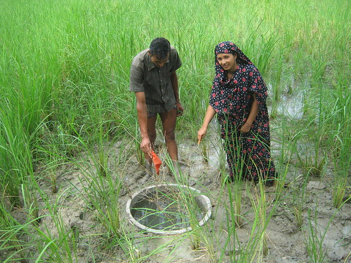 Fish Habitat Development Ring in Bangladesh. Photo by Mélody Braun, 2012.