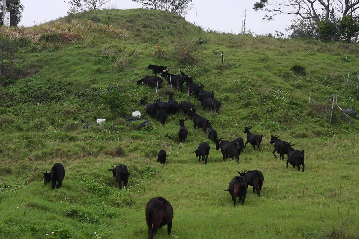 苗翔牧場(牛奶的故鄉)027