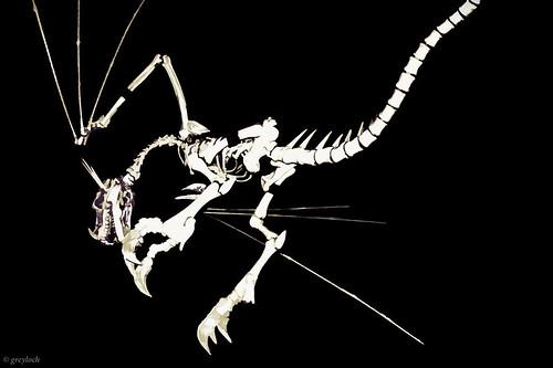 skeletal dragon graphic