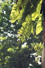 Green everywhere (Einas-A) Tags: park street city flowers light sunset sky urban sun plant tree green love nature beauty leaves rose night skyscraper garden photography dubai afternoon gulf bokeh sony iraq uae khalifa abudhabi malaysia alfa burj bulding palnts burjkhalifa