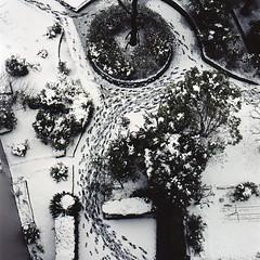 (masaaki miyara) Tags: park trees winter snow color colour 6x6 film japan mediumformat view roundabout spot 66 squareformat footsteps yokohama kanagawa   hasselblad500cm  kodakportra400  2013