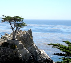 The Lonely Cypress ( cris  (searching for testimonials :)) Tags: california blue usa tree see monterey rocks blu cypress lonely roccia albero coth cipresso supershot bej abigfave flickraward diamondclassphotographer flickrdiamond absolutelystunningscapes coth5