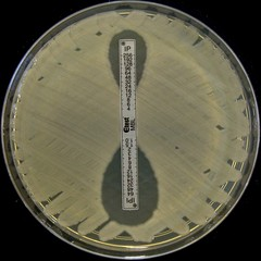 E.coli NDM-1 Metallo Beta-lactamase confirmation (Nathan Reading) Tags: sony doomsday bd bacteria microbiology resistance infection hardy biorad eo ecoli antibiotics etest escherichiacoli dsch3 biomerieux antibioticsensitivitytesting ndm1 sensitivitytesting antibioticresistance oxoid antibioticresistant carbapenemase gradientstrip gradientmic elipsometer blandm1