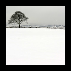 tree in the snow (feefers3) Tags: winter blackandwhite white snow tree landscape scotland countryside snowstorm lonetree falkirk snowydayinfebruary2013