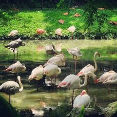 malaysia (Shaima82_4) Tags: green water birds malaysia