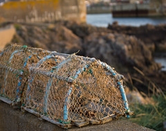 Lobster Pot (Ron Pettitt) Tags: uk scotland europe britain lobster seafood findochty banfshire