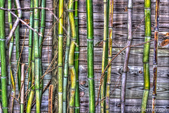 Day #147- Bamboo (bobbernier74) Tags: macro nature zoo nikon providence rhodeisland photoaday hdr rogerwilliams fotostat