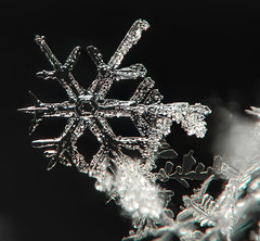 Snow crystals (ComputerHotline) Tags: winter snow france macro nature crystals hiver neige franchecomté fra belfort cristaux focusstacking