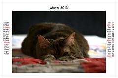 Alice - Marzo 2013 (Alfredo Liverani) Tags: italien italy pet cats pets faience cat italia calendar alice gatos creation your gato katze kalender gatto katzen gatti italie emiliaromagna calendario romagna faenza gatte gatta faventia aliceellen
