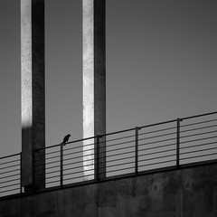 A crow left of the murder (96dpi) Tags: bridge bw square concrete snapshot crow brcke beton krhe regierungsviertel spreebogen