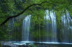Canopy in Green - - - Mossbrae Falls (ernogy) Tags: ca tree nature silhouette northerncalifornia landscape outdoors falls waterfalls sacramentoriver mossbraefalls mossbrae ernogy