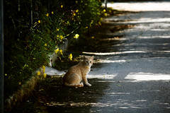 Untitled. (su sizzigorru) Tags: sardegna italy cats cat italia sardinia gatto gatti geremeas