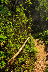 Forest Path (lighthunter09) Tags: park parque holiday cuba national nicho villaclara