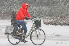 kleur-je-dag sneeuw (Don Pedro de Carrion de los Condes !) Tags: winter sneeuw rood fiets straat donpedro fietser onderweg verkeer kleurig winterdag ouder moederenkind rontonde kleurigewinterdag roodjacket