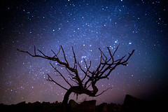 Night sky (Dan Josephson) Tags: longexposure sky tree night canon way stars army eos israel long exposure mark galaxy ii 5d milky f28 idf milkyway israelidefenseforces silhouett 14mm samyang