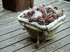 Still Winter 72/365 (Wanda Abbing Photography) Tags: winter hail lumix panasonic 365 day73 gf1 45200 day73365 3652013 365the2013edition 14mar13