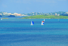 Scaur Hill View of Hamilton Harbour off in the distance (ShootsNikon) Tags: ocean flowers trees seascape beach s
