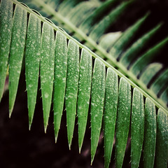 I'm not tired of green yet. (bratli) Tags: elementsorganizer