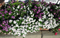 Flowers At The Apartment Complex Sign. (dccradio) Tags: lumberton nc northcarolina robesoncounty walnutmanorapartments flowers flowergarden ncgardening gardening greenery pretty nature outdoors outside plant floral flowerbed morning