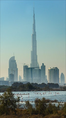 Dubai Lagoon and the Burj Khalifa (kate willmer) Tags: city sky skyscraper dubai cityscape uae flamingos lagoon burjkhalifa