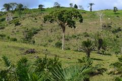 002-007 rvore (agnaldo.severo) Tags: rvore paisagem natureza animais pedras verde cu