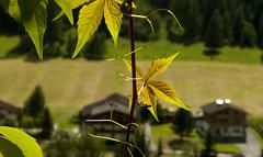 IMG_5885 (CanonCymru) Tags: austria heiligenblut mountains scenery