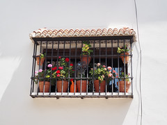 Window Flowers, Granada (HerringCoveMike) Tags: flowers pots granada spain streetscape bars window