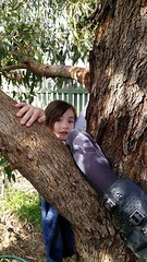 the things i find in the garden (ClareSnow) Tags: nibling niblingfun tuart treeclimbing tree gumtree eucalyptusgomphocephala eucalyptus garden perth
