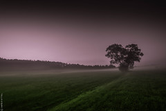 Early morning (Cloud 77) Tags: canon70d fog landscape landschaft nebel sonnenaufgang sunrise canon 1018