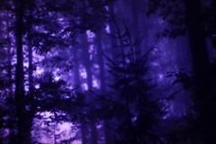 imbue (○ Hanna Lee ○) Tags: nature tree trees dream dreamy dreamyaesthetic dreamaesthetic purple purpleaesthetic naturephotography naturephotographer naturephotographers photography photographer photographers tumblrphotography tumblrphotographer tumblrphotographers originalphoto originalphotos originalphotography originalphotographer originalphotographers artisticphotography artisticphotographer artisticphotographers artphotography artphotographer artphotographers abstractphotography abstractphotographer abstractphotographers femalephotographer femalephotographers youngphotographer youngphotographers selftaughtphotographer selftaughtphotographers contemporaryphotography contemporaryphotographer contemporaryphotographers fineartphotography fineartphotographer fineartphotographers photographersontumblr photographersoftumblr