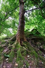 hermitage tree (marsupium photography) Tags: edinburgh scotland hermitage