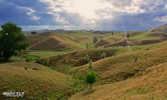 Sunbeam at Forgotten World Highway, New Zealand (mary fly) Tags: sunbeam forgotten world highway new zealand hills landscape shire
