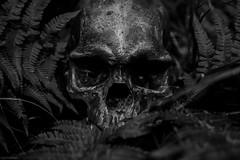skull (sami kuosmanen) Tags: dark dof dead death suomi summer skull kuusankoski kouvola kes kallo kuollut kuolema mustavalko tumma horror kauhu scary scandinavia finland forest